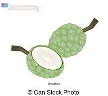 Arecaceae Illustrations and Stock Art. 78 Arecaceae illustration.