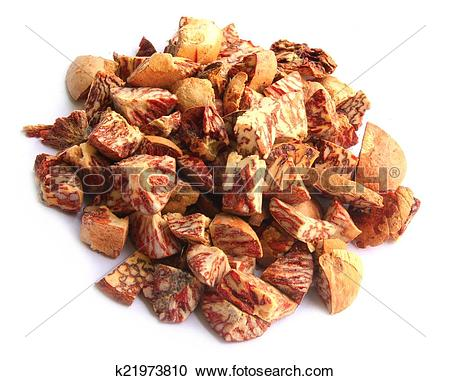 Stock Photography of Betel Nut or Areca Nut k21973810.