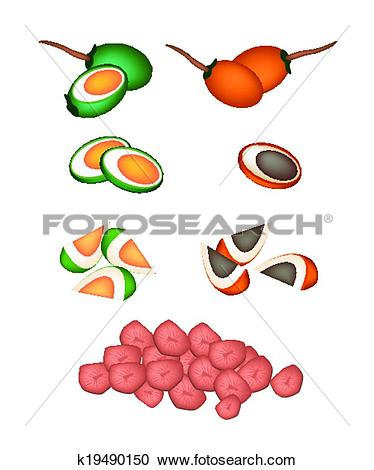 Clipart of Set of Areca Nut Fruit on White Background k19490150.