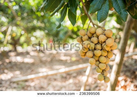 Bumper Crop Stock Photos, Images, & Pictures.
