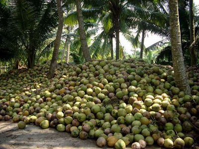 Arecanut plantation clipart #4