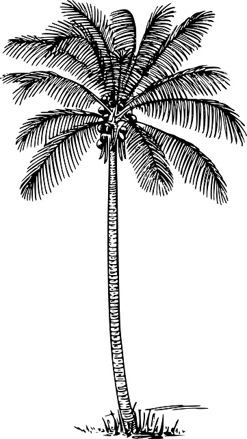 1000+ ideas about Palm Tree Drawing on Pinterest.