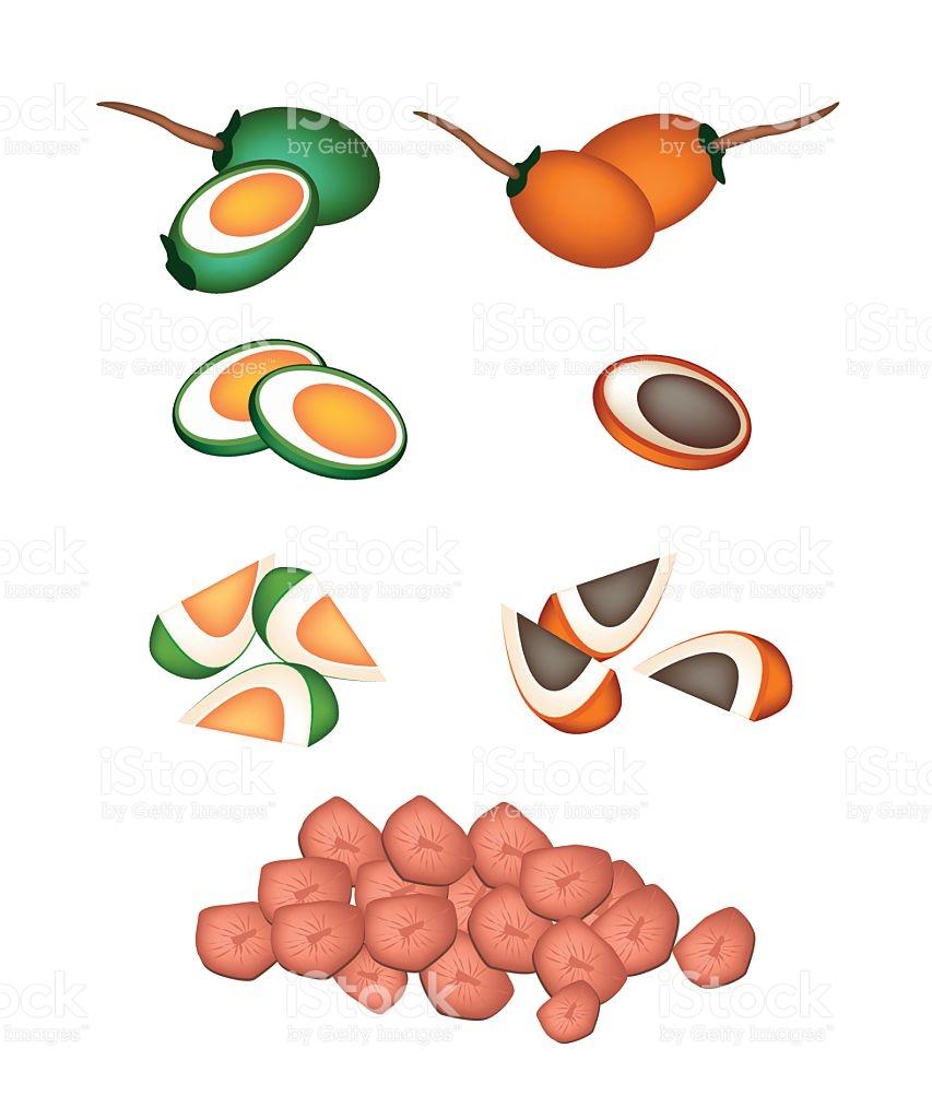 Set Of Areca Nut Fruit On White Background stock vector art.