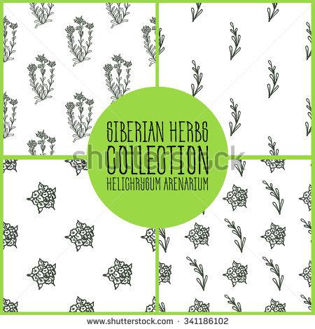 Helichrysum Arenarium Stock Photos, Royalty.