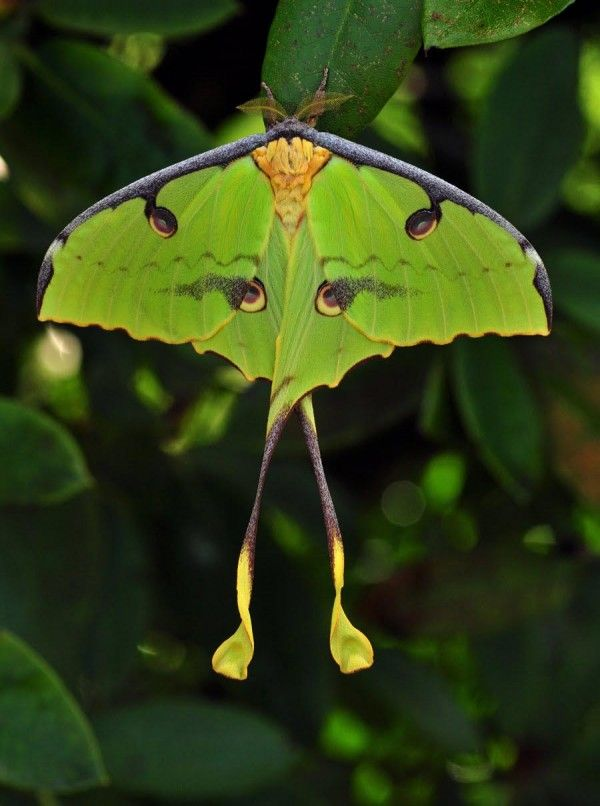1000+ images about Moths and Butterflies on Pinterest.