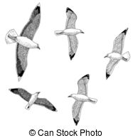 Argentatus Clipart and Stock Illustrations. 13 Argentatus vector.