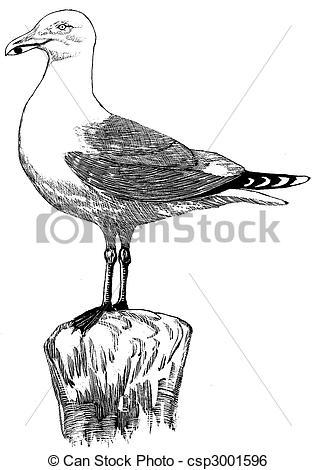 Stock Illustration of Herring Gull.