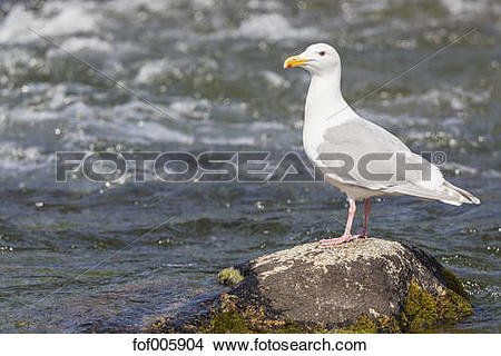 Stock Photo of USA, Alaska, Katmai Nationalpark, King Salmon.