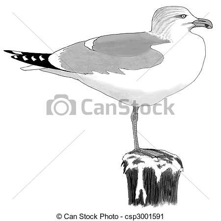 Clipart of Herring Gull.