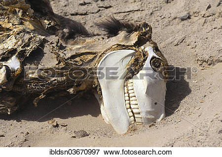 """Picture of """"Donkey carcass in the desert, Jujuy Province."""