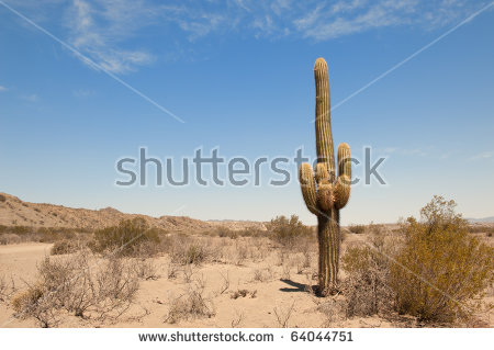 Cactus Desert Landscape Northern Argentina Stock Photo 64044751.