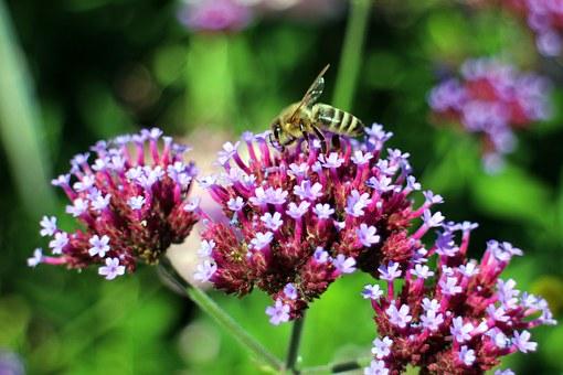 Wild, Bees.