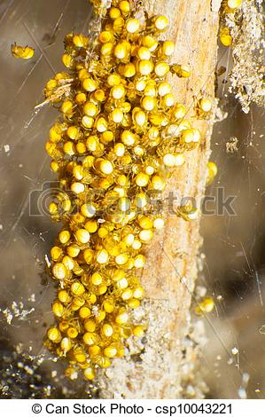 Stock Photo of Spiderlings.