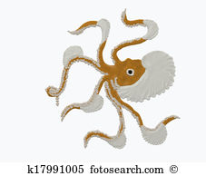 Argonaut Stock Illustrations. 11 argonaut clip art images and.