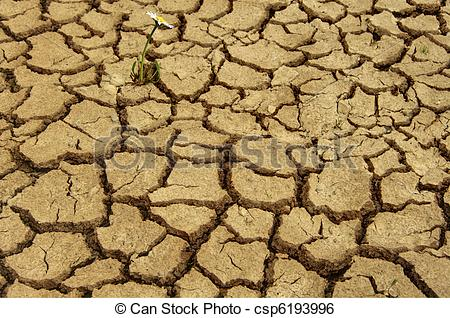Stock Image of Single daisy flower growing in dry arid earth.
