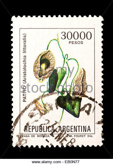 Aristolochiaceae Stock Photos & Aristolochiaceae Stock Images.