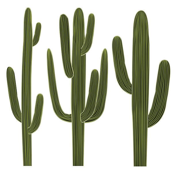 15 Not Burdensome Cactus Images Clip Art.