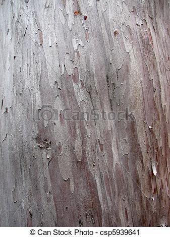 Stock Photography of smooth Arizona cypress bark.