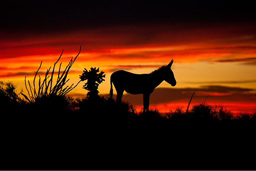 Arizona Sunset Silhouette.