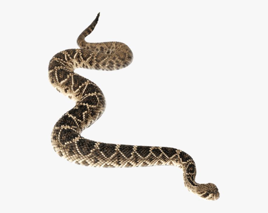 Rattlesnake Clipart Snake Mask.