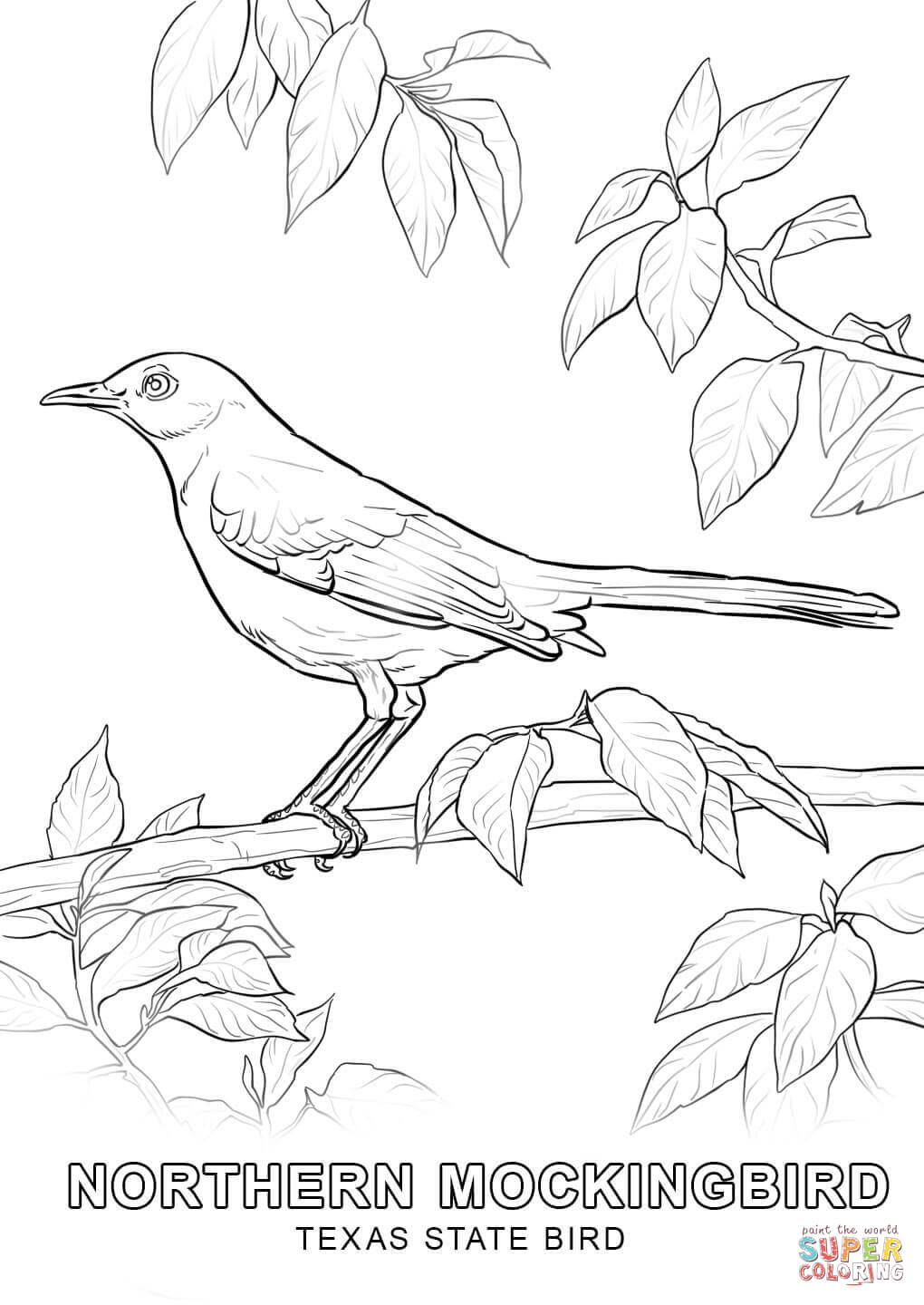Texas State Bird coloring page.