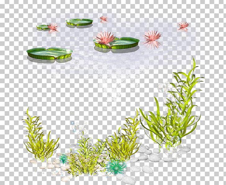 Algae Seaweed PNG, Clipart, Algae, Aquarium Decor, Aquatic.