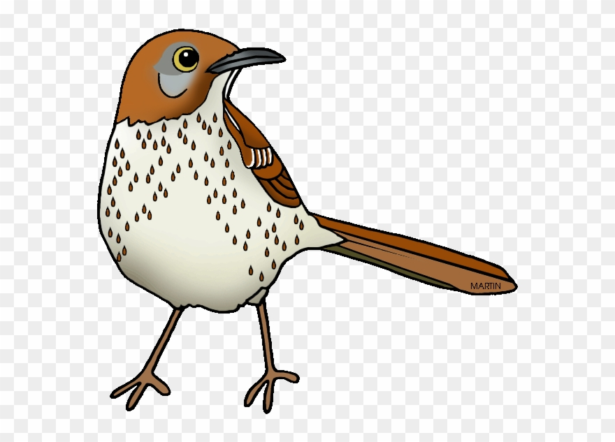 Images Of Georgia State Bird United States Clip Art.