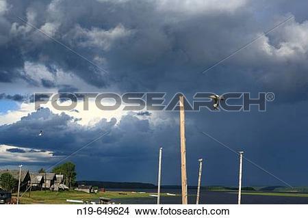Stock Photo of Flying bird, Vershinino, Kenozero lake, Archangelsk.