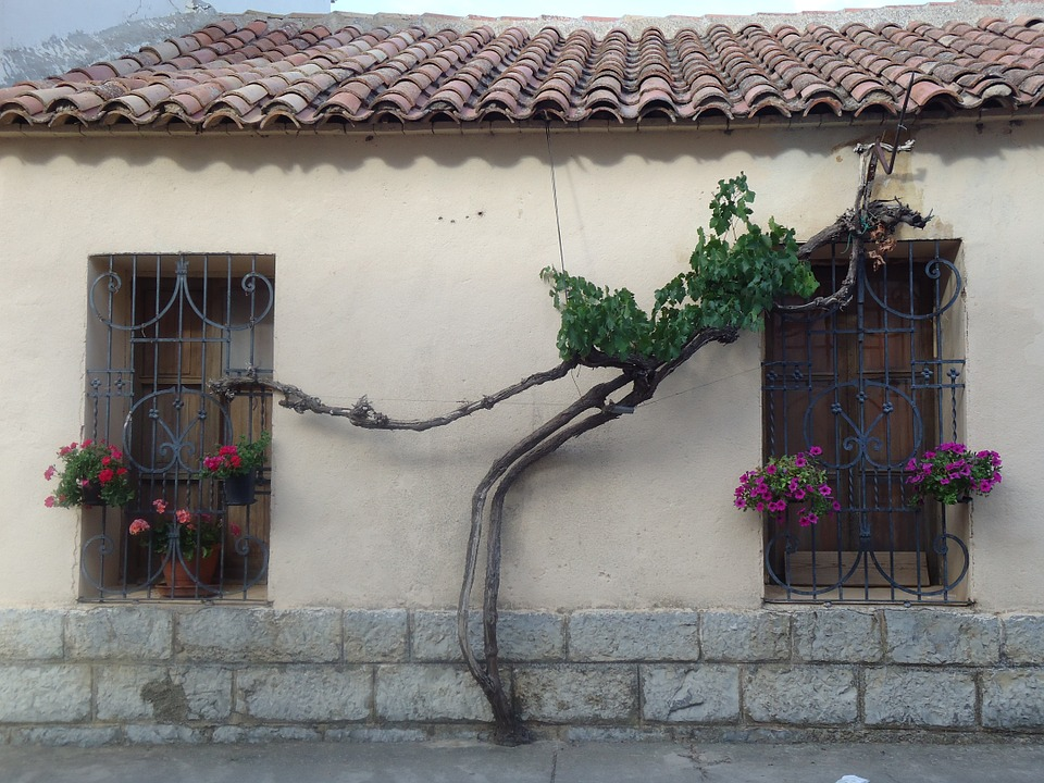 Free photo Branches Casita Green Plants Campestre Windows.