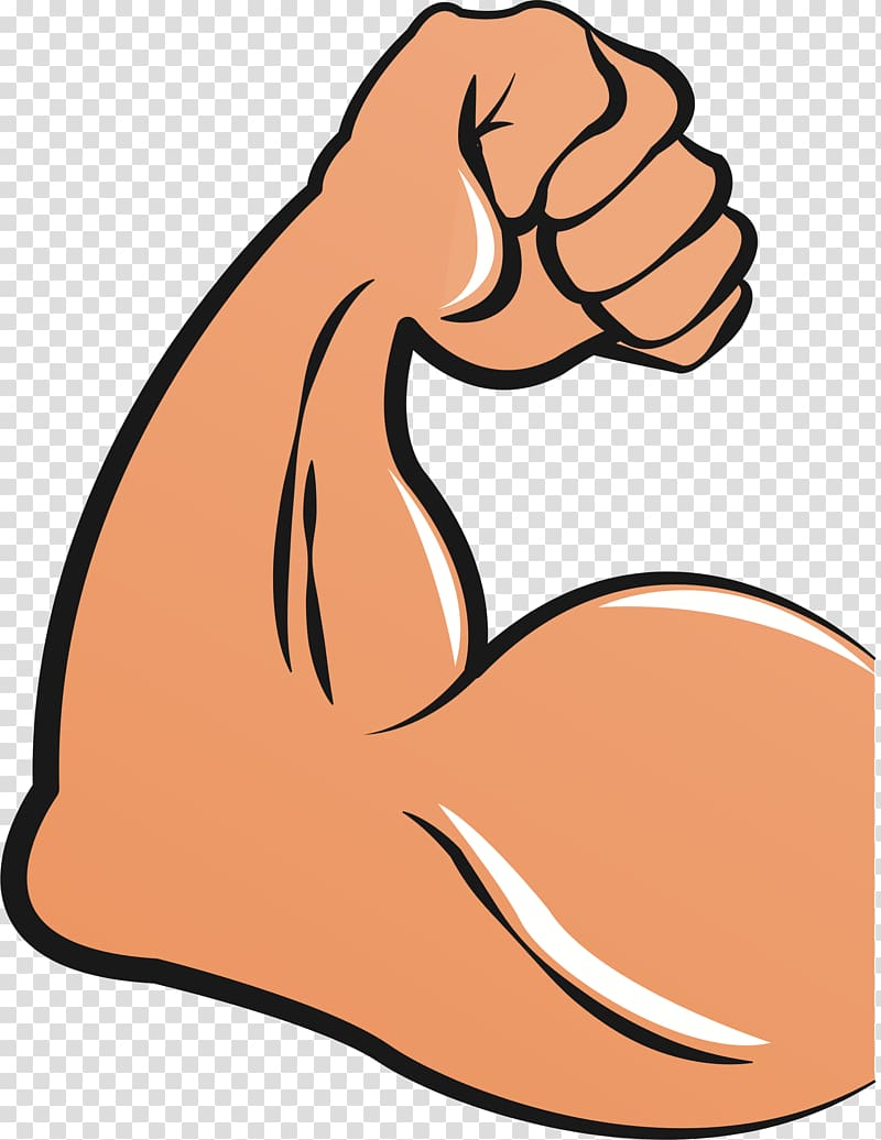 Biceps Arm Muscle , arm transparent background PNG clipart.