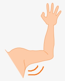 Arms PNG Images, Transparent Arms Image Download.