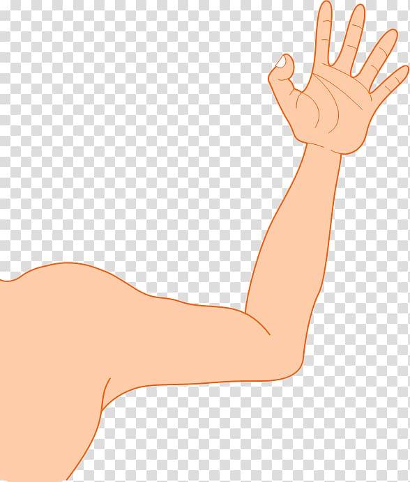 Thumb Hand model Elbow Human leg, Arm transparent background.