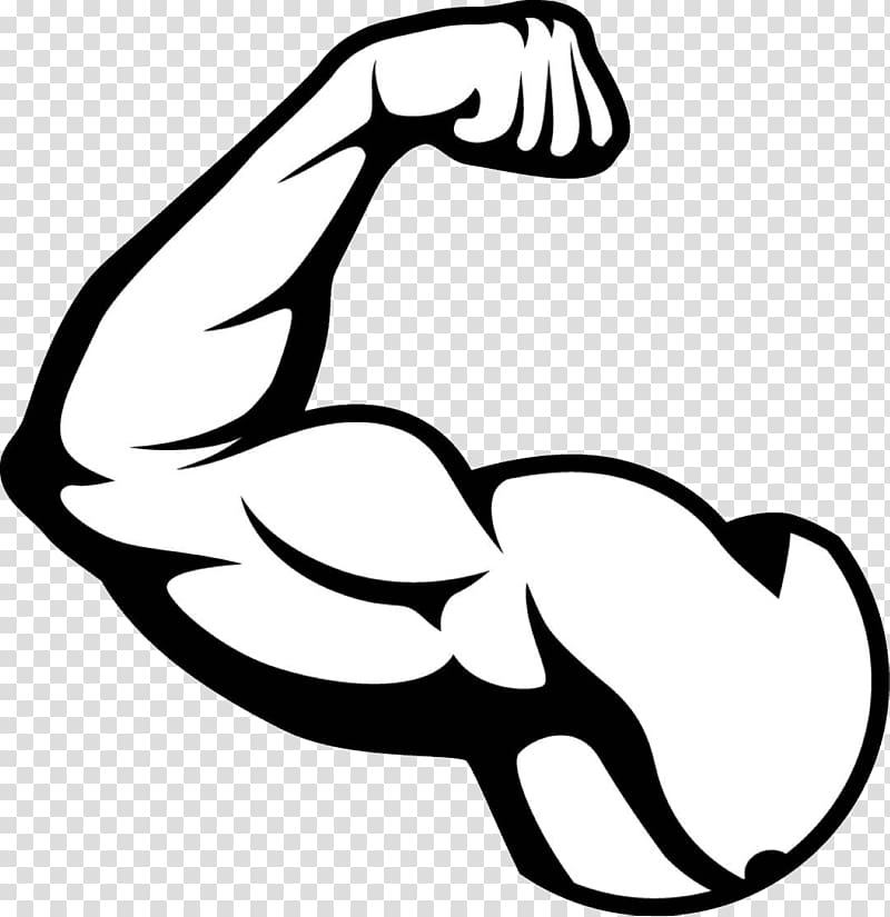 Biceps illustration, Biceps Arm Muscle, muscle transparent.