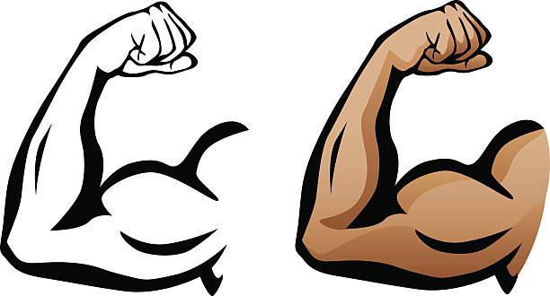 Arm muscle clipart 1 » Clipart Station.