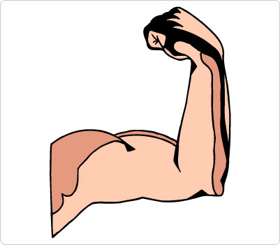 Arm muscles clipart #6