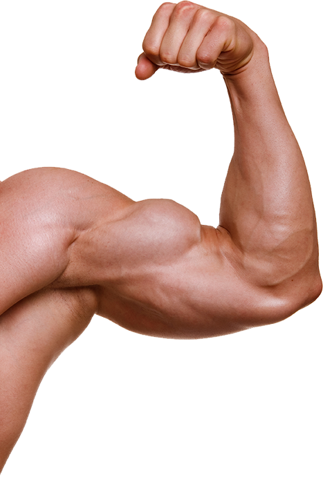 Muscle Arm Png, png collections at sccpre.cat.