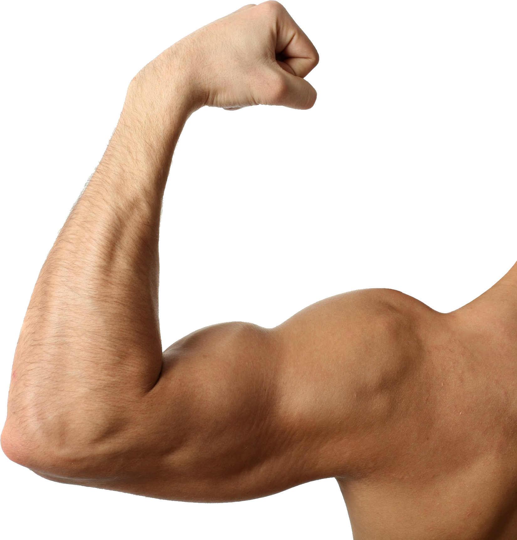 Muscular Arm Png, png collections at sccpre.cat.