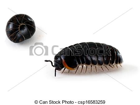 Rolly Poly Bug Clipart.