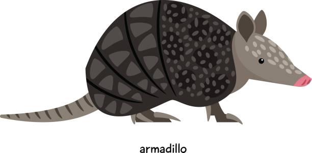 Best Armadillo Illustrations, Royalty.