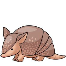 Armadillo clipart baby, Armadillo baby Transparent FREE for.