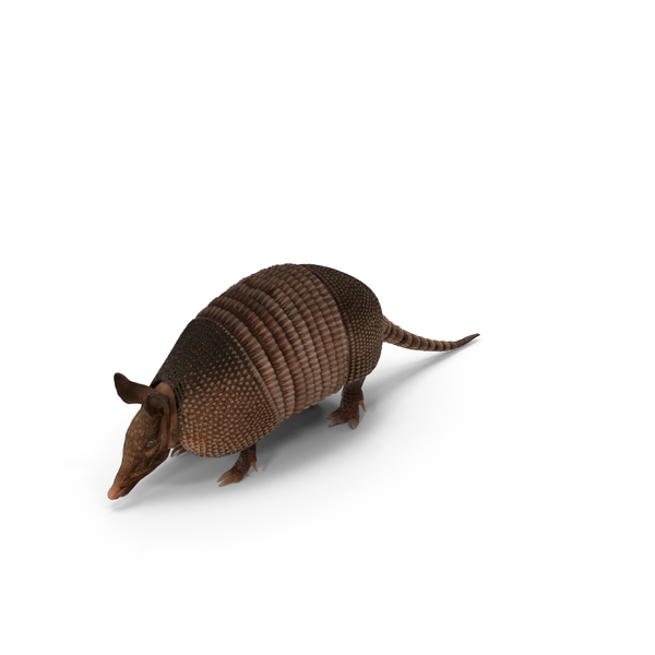 Armadillo PNG Images & PSDs for Download.