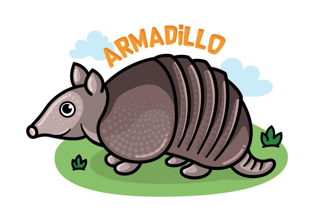 Armadillo Cartoon Vector.