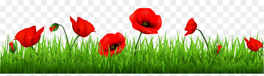Memorial Day Poppy Flower png download.