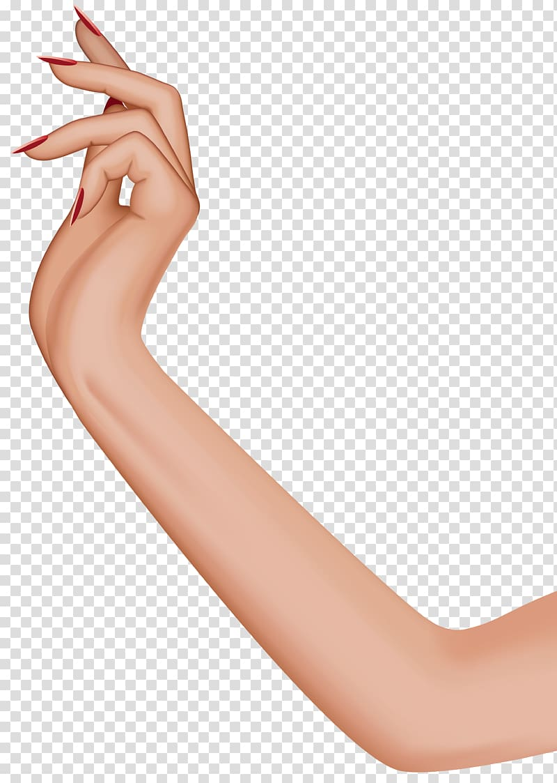 Arm clipart full hand, Arm full hand Transparent FREE for.