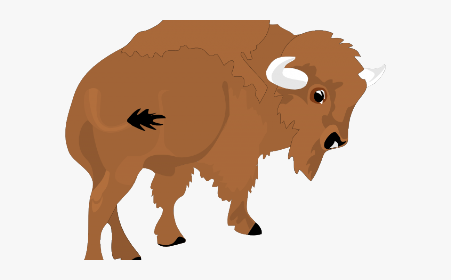 Vector Library Stock Water Buffalo Free On.