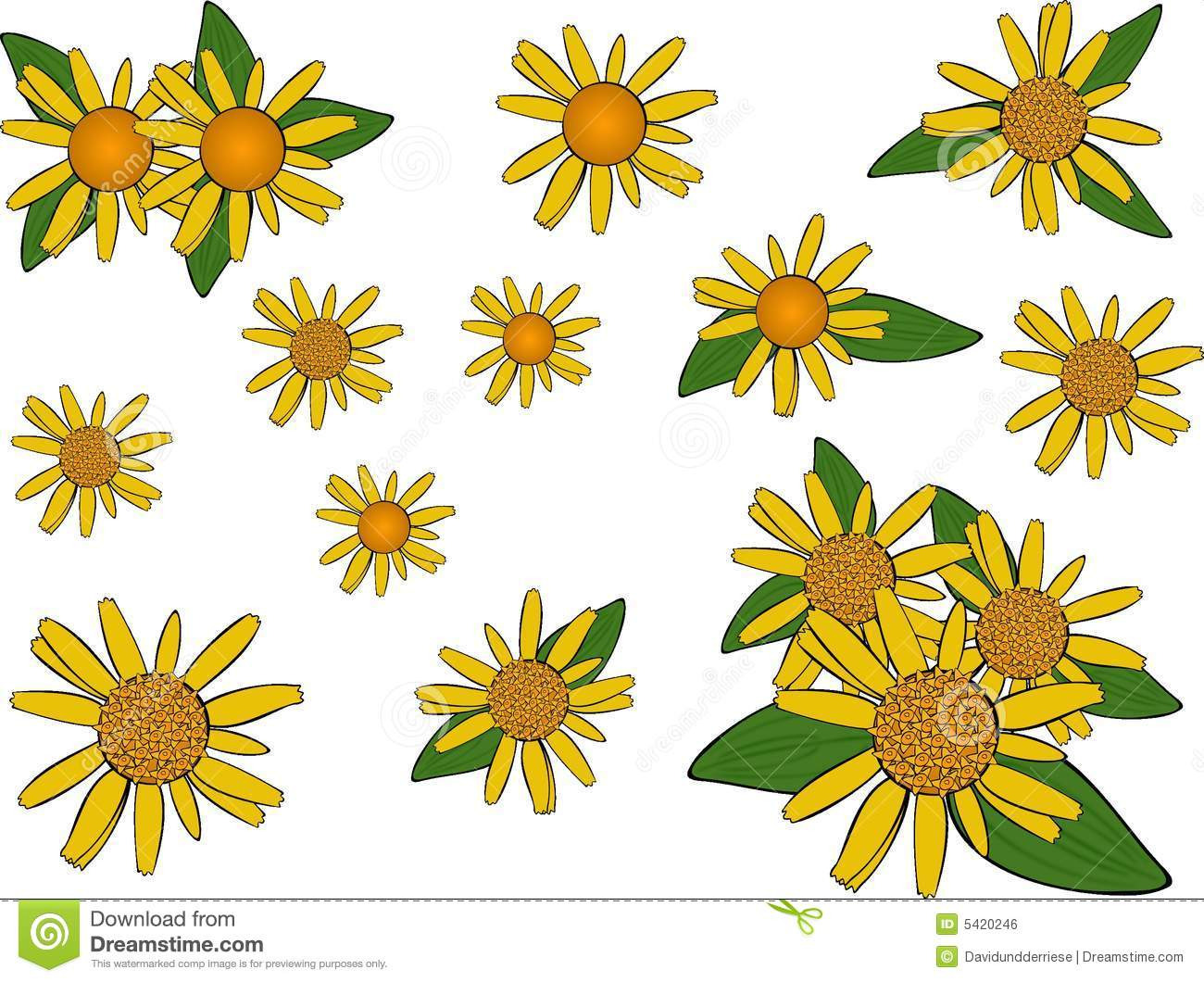 Arnica Flowers. Royalty Free Stock Image.