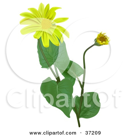 Clipart Outline Of Three Flowers And Leaves.