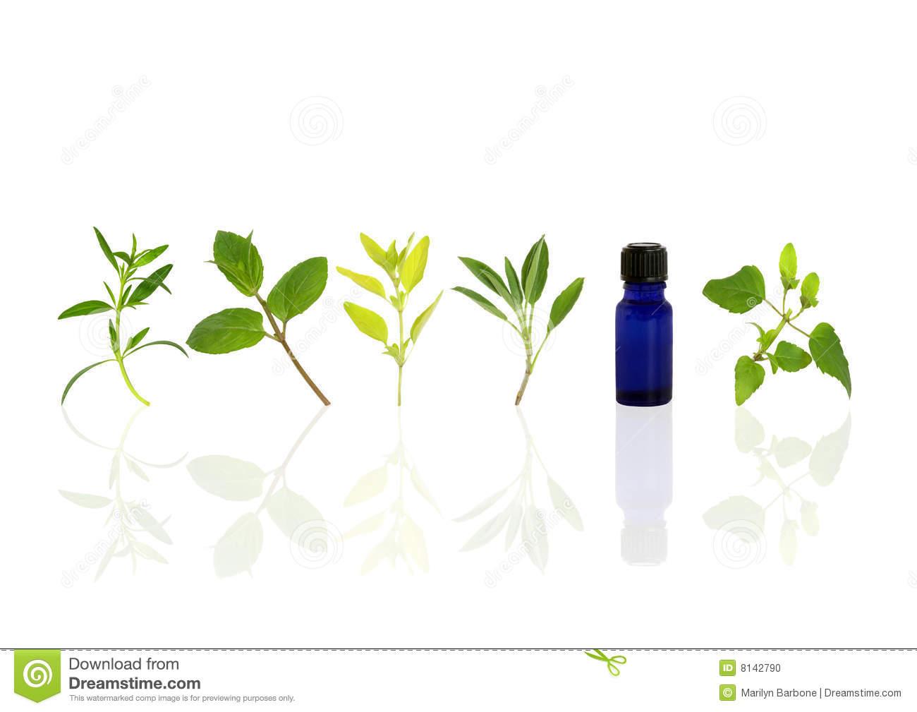 Aromatherapy Essential Oil Herbs Stock Photo.