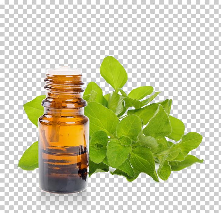Hierbas aceite esencial aromaterapia orégano, aceite PNG Clipart.