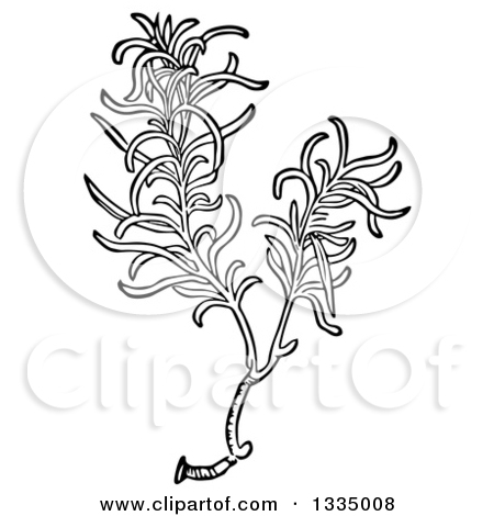 Clipart of a Black and White Woodcut Aromatic Culinary Herbal.